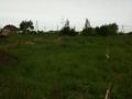 wilczylas2010-003