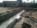 wilczylas2010-014